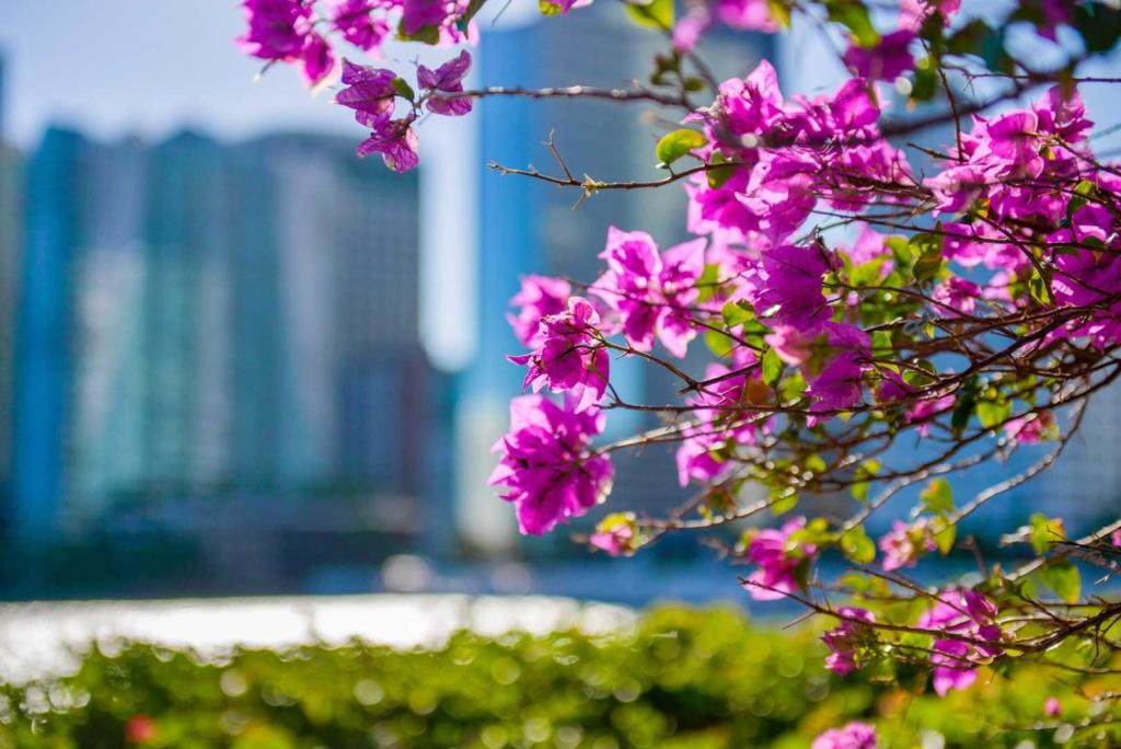 Maimi Flowers